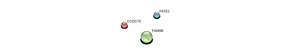 http://string-db.org/version_10/api/image/networkList?limit=0&targetmode=proteins&caller_identity=gene_cards&network_flavor=evidence&identifiers=9606.ENSP00000242819%0d%0a9606.ENSP00000359375%0d%0a9606.ENSP00000318716%0d%0a
