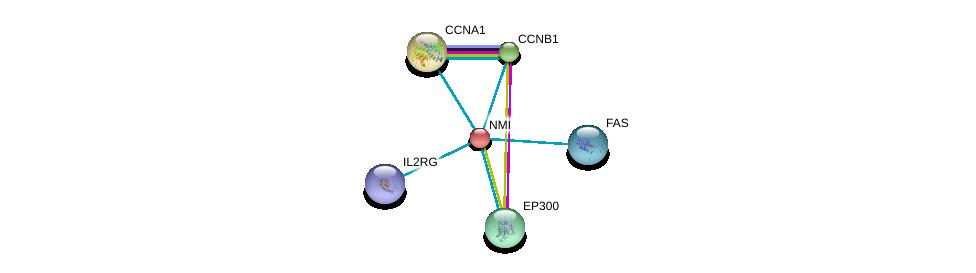 http://string-db.org/version_10/api/image/networkList?limit=0&targetmode=proteins&caller_identity=gene_cards&network_flavor=evidence&identifiers=9606.ENSP00000243346%0d%0a9606.ENSP00000363318%0d%0a9606.ENSP00000256442%0d%0a9606.ENSP00000255465%0d%0a9606.ENSP00000263253%0d%0a9606.ENSP00000347979%0d%0a