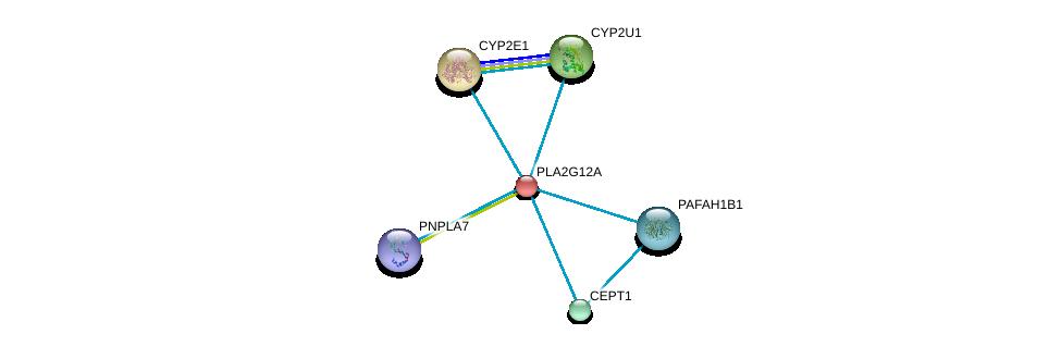 http://string-db.org/version_10/api/image/networkList?limit=0&targetmode=proteins&caller_identity=gene_cards&network_flavor=evidence&identifiers=9606.ENSP00000243501%0d%0a9606.ENSP00000349696%0d%0a9606.ENSP00000252945%0d%0a9606.ENSP00000380378%0d%0a9606.ENSP00000333212%0d%0a9606.ENSP00000384610%0d%0a