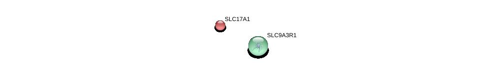 http://string-db.org/version_10/api/image/networkList?limit=0&targetmode=proteins&caller_identity=gene_cards&network_flavor=evidence&identifiers=9606.ENSP00000244527%0d%0a9606.ENSP00000262613%0d%0a9606.ENSP00000262613%0d%0a