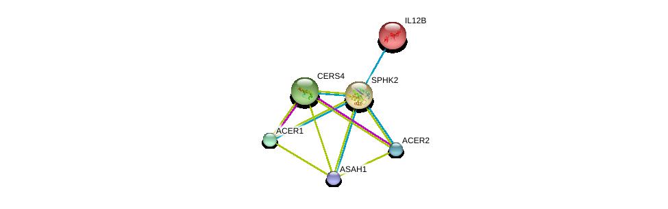 http://string-db.org/version_10/api/image/networkList?limit=0&targetmode=proteins&caller_identity=gene_cards&network_flavor=evidence&identifiers=9606.ENSP00000245222%0d%0a9606.ENSP00000301452%0d%0a9606.ENSP00000342609%0d%0a9606.ENSP00000371152%0d%0a9606.ENSP00000231228%0d%0a9606.ENSP00000251363%0d%0a