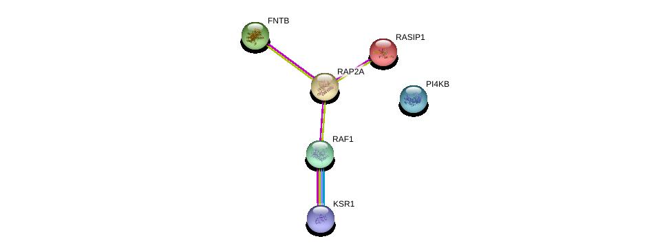 http://string-db.org/version_10/api/image/networkList?limit=0&targetmode=proteins&caller_identity=gene_cards&network_flavor=evidence&identifiers=9606.ENSP00000245304%0d%0a9606.ENSP00000251849%0d%0a9606.ENSP00000222145%0d%0a9606.ENSP00000246166%0d%0a9606.ENSP00000271657%0d%0a9606.ENSP00000323178%0d%0a