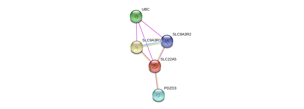 http://string-db.org/version_10/api/image/networkList?limit=0&targetmode=proteins&caller_identity=gene_cards&network_flavor=evidence&identifiers=9606.ENSP00000245407%0d%0a9606.ENSP00000262613%0d%0a9606.ENSP00000262613%0d%0a9606.ENSP00000408005%0d%0a9606.ENSP00000347742%0d%0a9606.ENSP00000344818%0d%0a