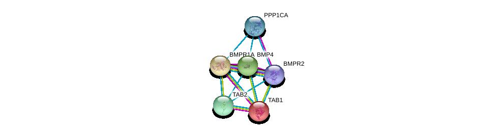 http://string-db.org/version_10/api/image/networkList?limit=0&targetmode=proteins&caller_identity=gene_cards&network_flavor=evidence&identifiers=9606.ENSP00000245451%0d%0a9606.ENSP00000224764%0d%0a9606.ENSP00000363708%0d%0a9606.ENSP00000326031%0d%0a9606.ENSP00000286332%0d%0a9606.ENSP00000216160%0d%0a