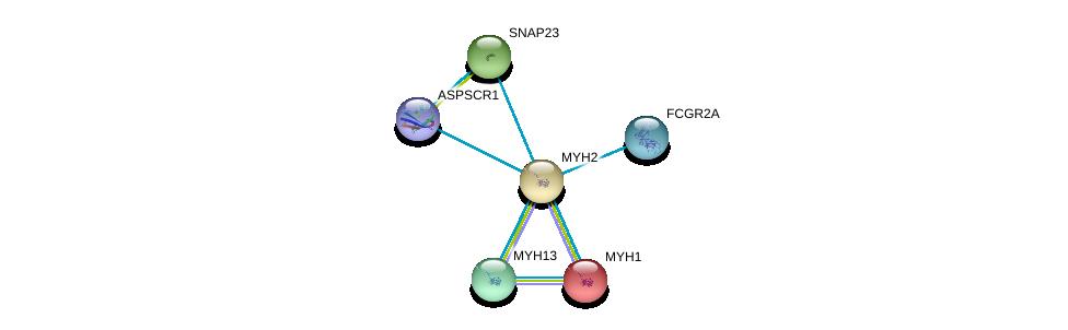 http://string-db.org/version_10/api/image/networkList?limit=0&targetmode=proteins&caller_identity=gene_cards&network_flavor=evidence&identifiers=9606.ENSP00000245503%0d%0a9606.ENSP00000226207%0d%0a9606.ENSP00000249647%0d%0a9606.ENSP00000252172%0d%0a9606.ENSP00000271450%0d%0a9606.ENSP00000302176%0d%0a