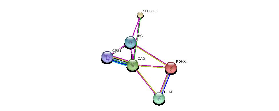 http://string-db.org/version_10/api/image/networkList?limit=0&targetmode=proteins&caller_identity=gene_cards&network_flavor=evidence&identifiers=9606.ENSP00000245680%0d%0a9606.ENSP00000344818%0d%0a9606.ENSP00000264705%0d%0a9606.ENSP00000280346%0d%0a9606.ENSP00000227868%0d%0a9606.ENSP00000402608%0d%0a