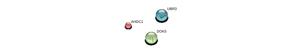 http://string-db.org/version_10/api/image/networkList?limit=0&targetmode=proteins&caller_identity=gene_cards&network_flavor=evidence&identifiers=9606.ENSP00000247087%0d%0a9606.ENSP00000396068%0d%0a9606.ENSP00000262593%0d%0a