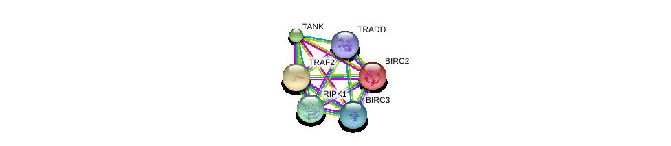 http://string-db.org/version_10/api/image/networkList?limit=0&targetmode=proteins&caller_identity=gene_cards&network_flavor=evidence&identifiers=9606.ENSP00000247668%0d%0a9606.ENSP00000227758%0d%0a9606.ENSP00000259075%0d%0a9606.ENSP00000259808%0d%0a9606.ENSP00000263464%0d%0a9606.ENSP00000341268%0d%0a