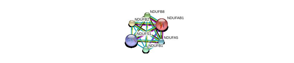 http://string-db.org/version_10/api/image/networkList?limit=0&targetmode=proteins&caller_identity=gene_cards&network_flavor=evidence&identifiers=9606.ENSP00000247866%0d%0a9606.ENSP00000007516%0d%0a9606.ENSP00000392709%0d%0a9606.ENSP00000347988%0d%0a9606.ENSP00000330787%0d%0a9606.ENSP00000299166%0d%0a