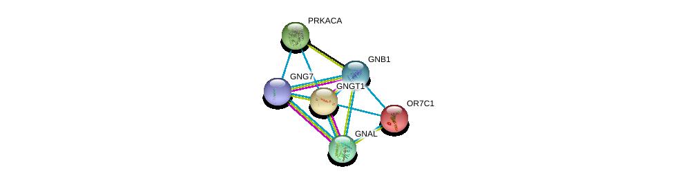 http://string-db.org/version_10/api/image/networkList?limit=0&targetmode=proteins&caller_identity=gene_cards&network_flavor=evidence&identifiers=9606.ENSP00000248073%0d%0a9606.ENSP00000334051%0d%0a9606.ENSP00000248572%0d%0a9606.ENSP00000367869%0d%0a9606.ENSP00000371594%0d%0a9606.ENSP00000309591%0d%0a