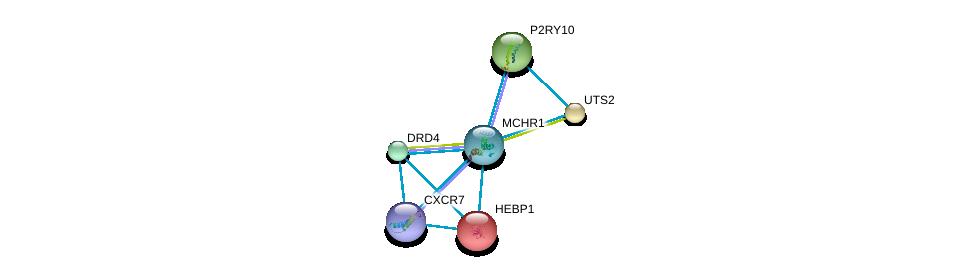 http://string-db.org/version_10/api/image/networkList?limit=0&targetmode=proteins&caller_identity=gene_cards&network_flavor=evidence&identifiers=9606.ENSP00000249016%0d%0a9606.ENSP00000272928%0d%0a9606.ENSP00000014930%0d%0a9606.ENSP00000054668%0d%0a9606.ENSP00000171757%0d%0a9606.ENSP00000176183%0d%0a
