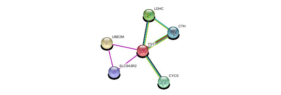 http://string-db.org/version_10/api/image/networkList?limit=0&targetmode=proteins&caller_identity=gene_cards&network_flavor=evidence&identifiers=9606.ENSP00000249042%0d%0a9606.ENSP00000253023%0d%0a9606.ENSP00000408005%0d%0a9606.ENSP00000280704%0d%0a9606.ENSP00000307786%0d%0a9606.ENSP00000359976%0d%0a