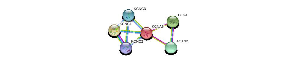 http://string-db.org/version_10/api/image/networkList?limit=0&targetmode=proteins&caller_identity=gene_cards&network_flavor=evidence&identifiers=9606.ENSP00000252321%0d%0a9606.ENSP00000293813%0d%0a9606.ENSP00000355537%0d%0a9606.ENSP00000434241%0d%0a9606.ENSP00000449253%0d%0a9606.ENSP00000265969%0d%0a