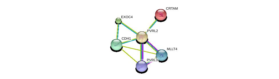 http://string-db.org/version_10/api/image/networkList?limit=0&targetmode=proteins&caller_identity=gene_cards&network_flavor=evidence&identifiers=9606.ENSP00000252483%0d%0a9606.ENSP00000375956%0d%0a9606.ENSP00000418070%0d%0a9606.ENSP00000227348%0d%0a9606.ENSP00000253861%0d%0a9606.ENSP00000261769%0d%0a