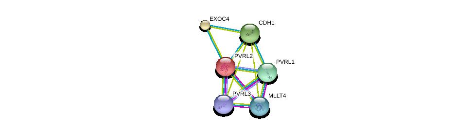 http://string-db.org/version_10/api/image/networkList?limit=0&targetmode=proteins&caller_identity=gene_cards&network_flavor=evidence&identifiers=9606.ENSP00000252483%0d%0a9606.ENSP00000375956%0d%0a9606.ENSP00000418070%0d%0a9606.ENSP00000253861%0d%0a9606.ENSP00000261769%0d%0a9606.ENSP00000264025%0d%0a