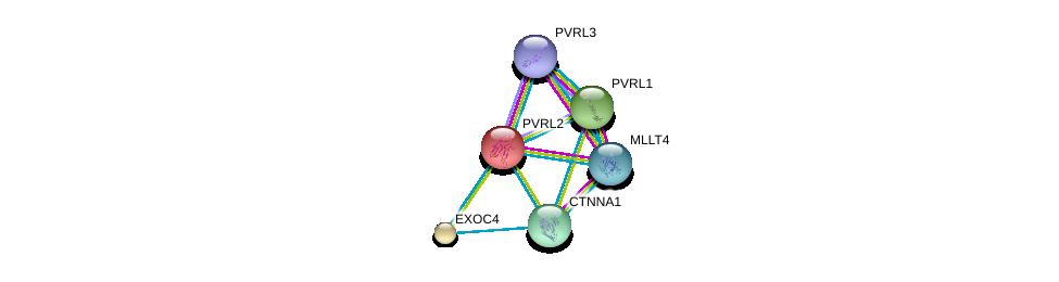 http://string-db.org/version_10/api/image/networkList?limit=0&targetmode=proteins&caller_identity=gene_cards&network_flavor=evidence&identifiers=9606.ENSP00000252483%0d%0a9606.ENSP00000375956%0d%0a9606.ENSP00000418070%0d%0a9606.ENSP00000253861%0d%0a9606.ENSP00000264025%0d%0a9606.ENSP00000304669%0d%0a