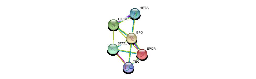 http://string-db.org/version_10/api/image/networkList?limit=0&targetmode=proteins&caller_identity=gene_cards&network_flavor=evidence&identifiers=9606.ENSP00000252723%0d%0a9606.ENSP00000222139%0d%0a9606.ENSP00000338018%0d%0a9606.ENSP00000370912%0d%0a9606.ENSP00000366898%0d%0a9606.ENSP00000354394%0d%0a