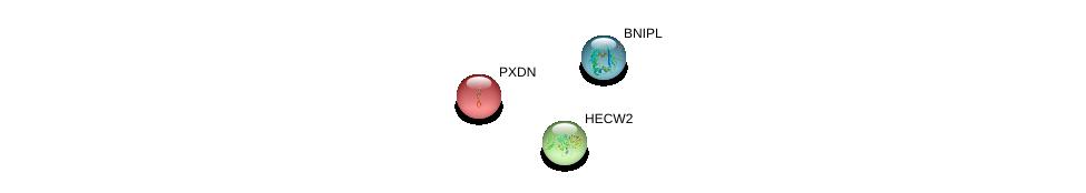 http://string-db.org/version_10/api/image/networkList?limit=0&targetmode=proteins&caller_identity=gene_cards&network_flavor=evidence&identifiers=9606.ENSP00000252804%0d%0a9606.ENSP00000260983%0d%0a9606.ENSP00000357927%0d%0a