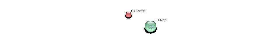 http://string-db.org/version_10/api/image/networkList?limit=0&targetmode=proteins&caller_identity=gene_cards&network_flavor=evidence&identifiers=9606.ENSP00000253110%0d%0a9606.ENSP00000319756%0d%0a