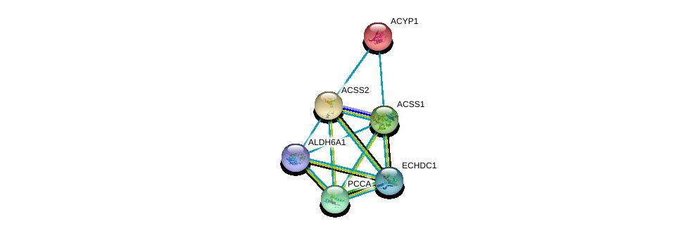 http://string-db.org/version_10/api/image/networkList?limit=0&targetmode=proteins&caller_identity=gene_cards&network_flavor=evidence&identifiers=9606.ENSP00000253382%0d%0a9606.ENSP00000436585%0d%0a9606.ENSP00000238618%0d%0a9606.ENSP00000316924%0d%0a9606.ENSP00000365462%0d%0a9606.ENSP00000450436%0d%0a