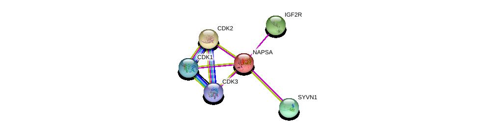 http://string-db.org/version_10/api/image/networkList?limit=0&targetmode=proteins&caller_identity=gene_cards&network_flavor=evidence&identifiers=9606.ENSP00000253719%0d%0a9606.ENSP00000266970%0d%0a9606.ENSP00000349437%0d%0a9606.ENSP00000400088%0d%0a9606.ENSP00000378699%0d%0a9606.ENSP00000366395%0d%0a