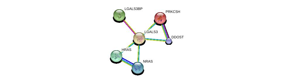 http://string-db.org/version_10/api/image/networkList?limit=0&targetmode=proteins&caller_identity=gene_cards&network_flavor=evidence&identifiers=9606.ENSP00000254301%0d%0a9606.ENSP00000262776%0d%0a9606.ENSP00000252455%0d%0a9606.ENSP00000309845%0d%0a9606.ENSP00000358548%0d%0a9606.ENSP00000364188%0d%0a
