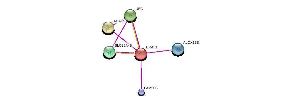 http://string-db.org/version_10/api/image/networkList?limit=0&targetmode=proteins&caller_identity=gene_cards&network_flavor=evidence&identifiers=9606.ENSP00000254928%0d%0a9606.ENSP00000348211%0d%0a9606.ENSP00000369530%0d%0a9606.ENSP00000369625%0d%0a9606.ENSP00000312618%0d%0a9606.ENSP00000344818%0d%0a