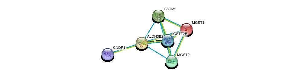 http://string-db.org/version_10/api/image/networkList?limit=0&targetmode=proteins&caller_identity=gene_cards&network_flavor=evidence&identifiers=9606.ENSP00000255084%0d%0a9606.ENSP00000256593%0d%0a9606.ENSP00000290765%0d%0a9606.ENSP00000265498%0d%0a9606.ENSP00000010404%0d%0a9606.ENSP00000351682%0d%0a