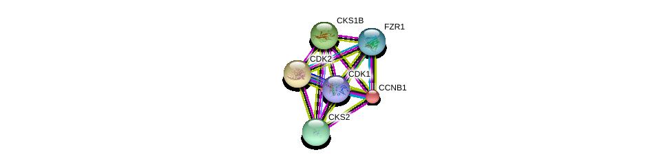 http://string-db.org/version_10/api/image/networkList?limit=0&targetmode=proteins&caller_identity=gene_cards&network_flavor=evidence&identifiers=9606.ENSP00000256442%0d%0a9606.ENSP00000364976%0d%0a9606.ENSP00000378699%0d%0a9606.ENSP00000266970%0d%0a9606.ENSP00000311083%0d%0a9606.ENSP00000378529%0d%0a