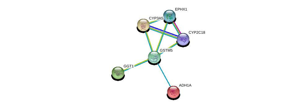 http://string-db.org/version_10/api/image/networkList?limit=0&targetmode=proteins&caller_identity=gene_cards&network_flavor=evidence&identifiers=9606.ENSP00000256593%0d%0a9606.ENSP00000209668%0d%0a9606.ENSP00000222982%0d%0a9606.ENSP00000248923%0d%0a9606.ENSP00000272167%0d%0a9606.ENSP00000285979%0d%0a