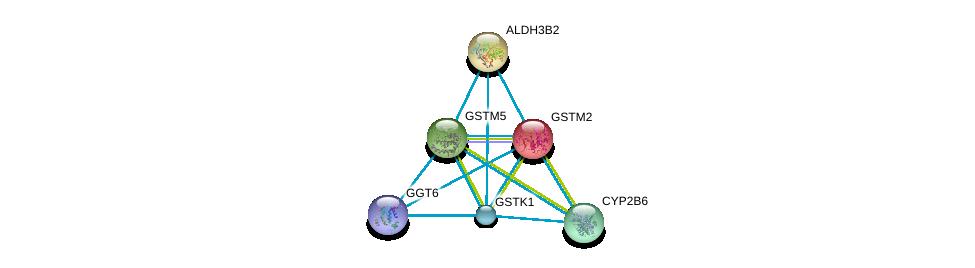 http://string-db.org/version_10/api/image/networkList?limit=0&targetmode=proteins&caller_identity=gene_cards&network_flavor=evidence&identifiers=9606.ENSP00000256593%0d%0a9606.ENSP00000255084%0d%0a9606.ENSP00000458307%0d%0a9606.ENSP00000431049%0d%0a9606.ENSP00000324648%0d%0a9606.ENSP00000241337%0d%0a