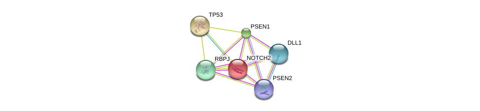 http://string-db.org/version_10/api/image/networkList?limit=0&targetmode=proteins&caller_identity=gene_cards&network_flavor=evidence&identifiers=9606.ENSP00000256646%0d%0a9606.ENSP00000269305%0d%0a9606.ENSP00000355718%0d%0a9606.ENSP00000345206%0d%0a9606.ENSP00000326366%0d%0a9606.ENSP00000355747%0d%0a