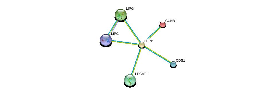 http://string-db.org/version_10/api/image/networkList?limit=0&targetmode=proteins&caller_identity=gene_cards&network_flavor=evidence&identifiers=9606.ENSP00000256720%0d%0a9606.ENSP00000256442%0d%0a9606.ENSP00000261292%0d%0a9606.ENSP00000283415%0d%0a9606.ENSP00000295887%0d%0a9606.ENSP00000299022%0d%0a