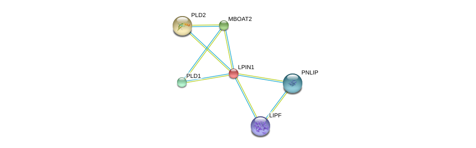http://string-db.org/version_10/api/image/networkList?limit=0&targetmode=proteins&caller_identity=gene_cards&network_flavor=evidence&identifiers=9606.ENSP00000256720%0d%0a9606.ENSP00000302177%0d%0a9606.ENSP00000342793%0d%0a9606.ENSP00000358223%0d%0a9606.ENSP00000263088%0d%0a9606.ENSP00000377900%0d%0a