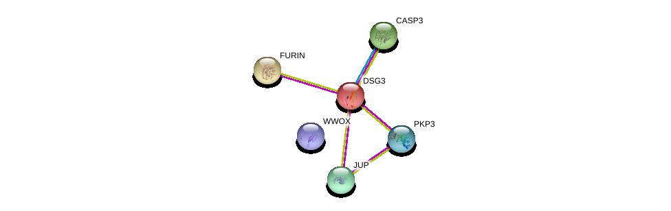 http://string-db.org/version_10/api/image/networkList?limit=0&targetmode=proteins&caller_identity=gene_cards&network_flavor=evidence&identifiers=9606.ENSP00000257189%0d%0a9606.ENSP00000311113%0d%0a9606.ENSP00000331678%0d%0a9606.ENSP00000268171%0d%0a9606.ENSP00000311032%0d%0a9606.ENSP00000457230%0d%0a