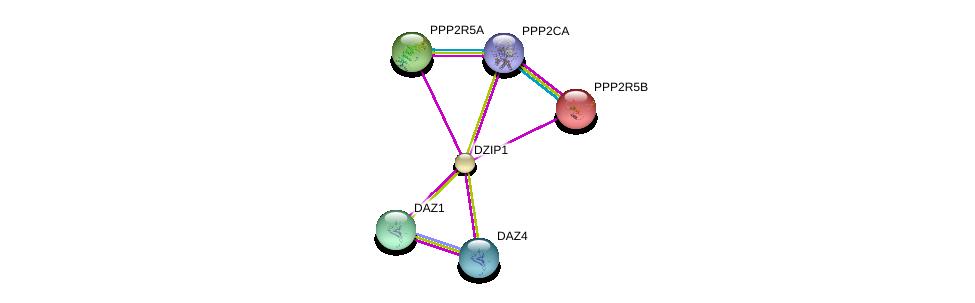 http://string-db.org/version_10/api/image/networkList?limit=0&targetmode=proteins&caller_identity=gene_cards&network_flavor=evidence&identifiers=9606.ENSP00000257312%0d%0a9606.ENSP00000384573%0d%0a9606.ENSP00000401363%0d%0a9606.ENSP00000418447%0d%0a9606.ENSP00000164133%0d%0a9606.ENSP00000261461%0d%0a