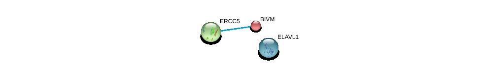 http://string-db.org/version_10/api/image/networkList?limit=0&targetmode=proteins&caller_identity=gene_cards&network_flavor=evidence&identifiers=9606.ENSP00000257336%0d%0a9606.ENSP00000347978%0d%0a9606.ENSP00000385269%0d%0a