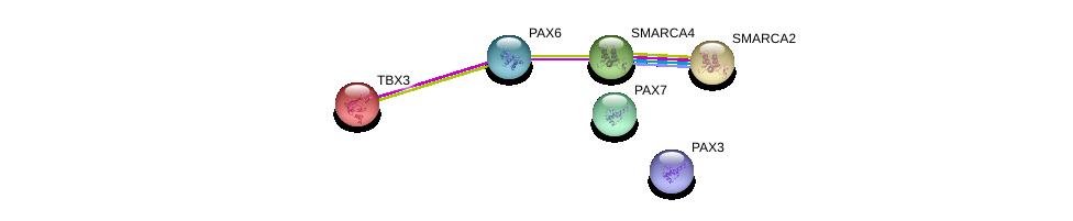 http://string-db.org/version_10/api/image/networkList?limit=0&targetmode=proteins&caller_identity=gene_cards&network_flavor=evidence&identifiers=9606.ENSP00000257566%0d%0a9606.ENSP00000265773%0d%0a9606.ENSP00000350720%0d%0a9606.ENSP00000368401%0d%0a9606.ENSP00000364524%0d%0a9606.ENSP00000375921%0d%0a