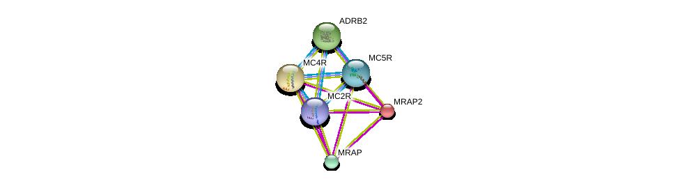 http://string-db.org/version_10/api/image/networkList?limit=0&targetmode=proteins&caller_identity=gene_cards&network_flavor=evidence&identifiers=9606.ENSP00000257776%0d%0a9606.ENSP00000306697%0d%0a9606.ENSP00000333821%0d%0a9606.ENSP00000299766%0d%0a9606.ENSP00000305372%0d%0a9606.ENSP00000318077%0d%0a