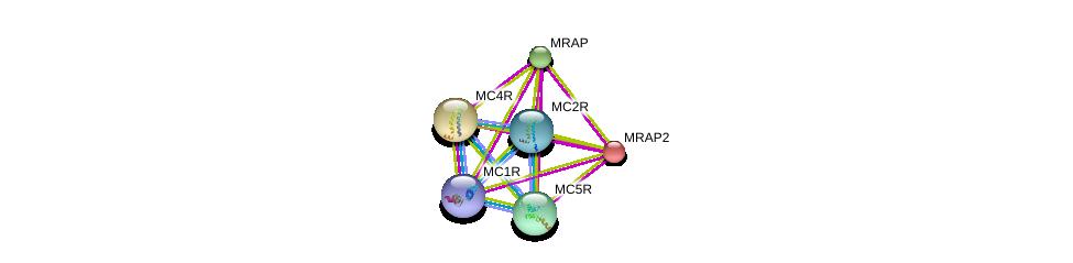 http://string-db.org/version_10/api/image/networkList?limit=0&targetmode=proteins&caller_identity=gene_cards&network_flavor=evidence&identifiers=9606.ENSP00000257776%0d%0a9606.ENSP00000451605%0d%0a9606.ENSP00000333821%0d%0a9606.ENSP00000318077%0d%0a9606.ENSP00000306697%0d%0a9606.ENSP00000299766%0d%0a