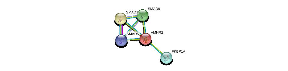 http://string-db.org/version_10/api/image/networkList?limit=0&targetmode=proteins&caller_identity=gene_cards&network_flavor=evidence&identifiers=9606.ENSP00000257863%0d%0a9606.ENSP00000441954%0d%0a9606.ENSP00000371138%0d%0a9606.ENSP00000371138%0d%0a9606.ENSP00000305769%0d%0a9606.ENSP00000369154%0d%0a