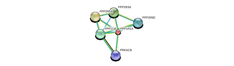 http://string-db.org/version_10/api/image/networkList?limit=0&targetmode=proteins&caller_identity=gene_cards&network_flavor=evidence&identifiers=9606.ENSP00000257905%0d%0a9606.ENSP00000359719%0d%0a9606.ENSP00000296122%0d%0a9606.ENSP00000261461%0d%0a9606.ENSP00000264977%0d%0a9606.ENSP00000337641%0d%0a