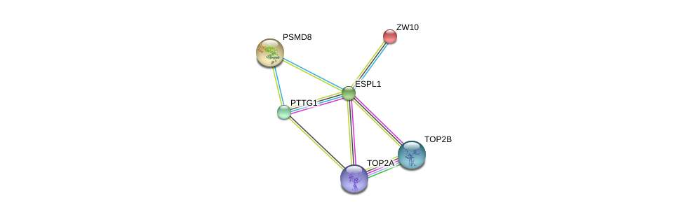 http://string-db.org/version_10/api/image/networkList?limit=0&targetmode=proteins&caller_identity=gene_cards&network_flavor=evidence&identifiers=9606.ENSP00000257934%0d%0a9606.ENSP00000344936%0d%0a9606.ENSP00000396704%0d%0a9606.ENSP00000411532%0d%0a9606.ENSP00000200135%0d%0a9606.ENSP00000215071%0d%0a