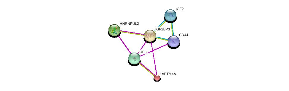 http://string-db.org/version_10/api/image/networkList?limit=0&targetmode=proteins&caller_identity=gene_cards&network_flavor=evidence&identifiers=9606.ENSP00000258729%0d%0a9606.ENSP00000344818%0d%0a9606.ENSP00000391826%0d%0a9606.ENSP00000398632%0d%0a9606.ENSP00000175091%0d%0a9606.ENSP00000301785%0d%0a