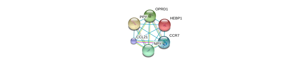 http://string-db.org/version_10/api/image/networkList?limit=0&targetmode=proteins&caller_identity=gene_cards&network_flavor=evidence&identifiers=9606.ENSP00000259607%0d%0a9606.ENSP00000246657%0d%0a9606.ENSP00000014930%0d%0a9606.ENSP00000225992%0d%0a9606.ENSP00000234961%0d%0a9606.ENSP00000242152%0d%0a