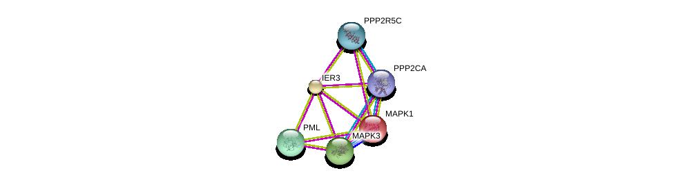 http://string-db.org/version_10/api/image/networkList?limit=0&targetmode=proteins&caller_identity=gene_cards&network_flavor=evidence&identifiers=9606.ENSP00000259874%0d%0a9606.ENSP00000215832%0d%0a9606.ENSP00000268058%0d%0a9606.ENSP00000263025%0d%0a9606.ENSP00000418447%0d%0a9606.ENSP00000412324%0d%0a