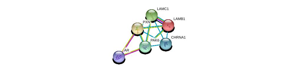 http://string-db.org/version_10/api/image/networkList?limit=0&targetmode=proteins&caller_identity=gene_cards&network_flavor=evidence&identifiers=9606.ENSP00000260404%0d%0a9606.ENSP00000363822%0d%0a9606.ENSP00000228307%0d%0a9606.ENSP00000222399%0d%0a9606.ENSP00000258341%0d%0a9606.ENSP00000261007%0d%0a