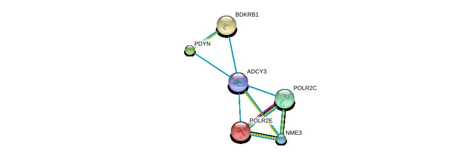 http://string-db.org/version_10/api/image/networkList?limit=0&targetmode=proteins&caller_identity=gene_cards&network_flavor=evidence&identifiers=9606.ENSP00000260600%0d%0a9606.ENSP00000215587%0d%0a9606.ENSP00000216629%0d%0a9606.ENSP00000217305%0d%0a9606.ENSP00000219252%0d%0a9606.ENSP00000219302%0d%0a