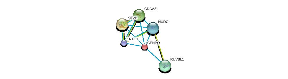 http://string-db.org/version_10/api/image/networkList?limit=0&targetmode=proteins&caller_identity=gene_cards&network_flavor=evidence&identifiers=9606.ENSP00000260662%0d%0a9606.ENSP00000268919%0d%0a9606.ENSP00000316121%0d%0a9606.ENSP00000318297%0d%0a9606.ENSP00000319664%0d%0a9606.ENSP00000328236%0d%0a