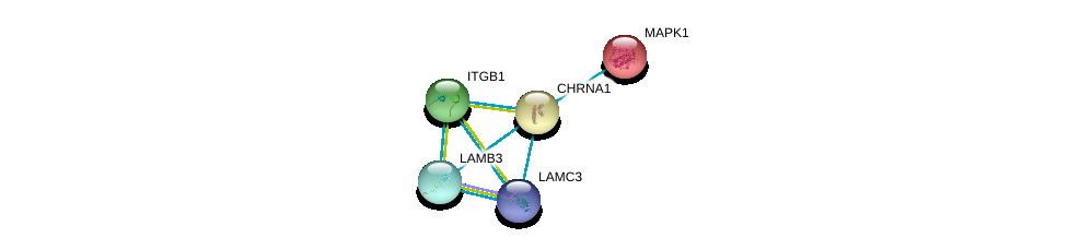http://string-db.org/version_10/api/image/networkList?limit=0&targetmode=proteins&caller_identity=gene_cards&network_flavor=evidence&identifiers=9606.ENSP00000261007%0d%0a9606.ENSP00000348384%0d%0a9606.ENSP00000348384%0d%0a9606.ENSP00000303351%0d%0a9606.ENSP00000215832%0d%0a9606.ENSP00000354360%0d%0a